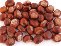 Horse chestnut, Conker. A conker is the seed of a horse chesnut tree Stock Images