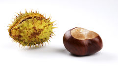 Horse Chestnut or Conker Royalty Free Stock Photos