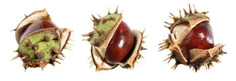 Horse chestnut (conker) border Stock Images