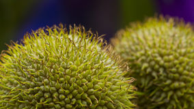 Horse chestnut , conker close up composition photography Royalty Free Stock Photos
