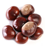 Horse-chestnut conkers Stock Photography