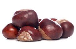 Horse-chestnut conkers Royalty Free Stock Photography