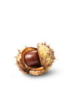 Horse chestnut on craked shell Royalty Free Stock Photos