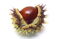 Horse-chestnut isolated Stock Photos