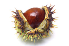 Horse-chestnut isolated Stock Photos