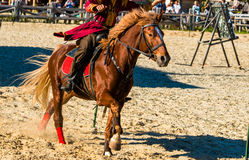Horse chestnut racing. The chestnut horse is on the show royalty free stock photos
