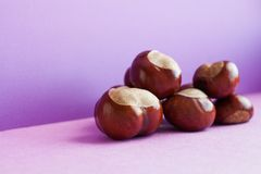 Horse chestnut seeds on purple background. Autumn artistic still life with Aesculus hippocastanumon ripe Buckeye fruits stock photography