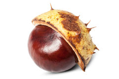 Horse chestnut in shell Stock Photo