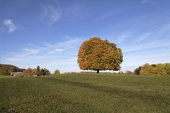 Free Horse Chestnut Tree (Aesculus Hippocastanum) Conker Tree In Autumn, Lengerich, North Rhine-Westphalia, Germany Royalty Free Stock Photo - 37857675