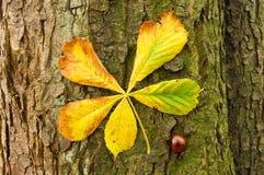 Horse chestnut tree bark,leaf and fruit Stock Photography