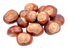 Horse Chestnut Tree Conkers Royalty Free Stock Photography