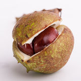 Horse chestnut. Stock Images