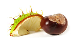 Horse-chestnut on a white background Stock Photo