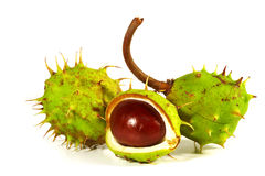 Horse-chestnut on a white background Royalty Free Stock Photos