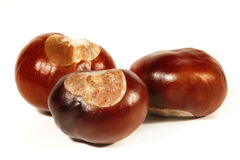 Horse-chestnut on a white background Stock Images