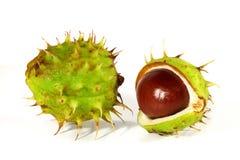 Horse-chestnut on a white background Stock Photo