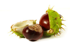 Horse-chestnut on a white background Stock Photography