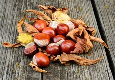 Horse chestnut on the wooden background Stock Images