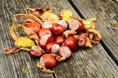 Horse chestnut on the wooden background Royalty Free Stock Image
