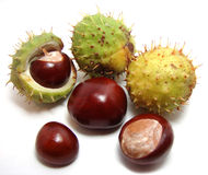 Horse-chestnuts #1. Closeup view of six horse-chestnuts on white background Stock Photography