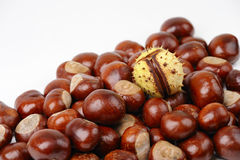 Horse chestnuts royalty free stock image