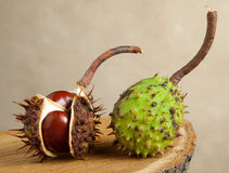 Horse chestnuts Royalty Free Stock Photography