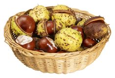 Horse chestnuts. A basket with some horse chestnuts in white back royalty free stock photo