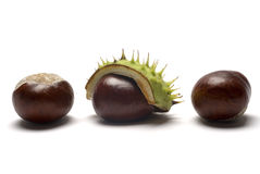 Horse Chestnuts Stock Image