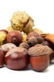 Horse chestnuts and acorns Royalty Free Stock Photos