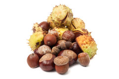 Horse chestnuts and acorns isolated on white Stock Images
