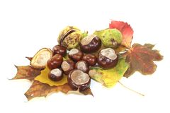 Horse chestnuts Royalty Free Stock Images