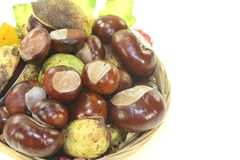 Horse chestnuts in a basket Stock Photo