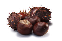 Horse chestnuts, clipping paths. Whole and husked horse chestnuts fruits of Aesculus hippocastanum. Clipping paths, shadow separated Royalty Free Stock Photography
