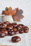 Horse chestnuts or conkers on the table, basket with autumn leav. Collection of horse chestnuts also know as conkers scattered on the table. Wicker basket with royalty free stock images