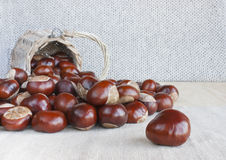 Horse chestnuts or conkers on the table. Stock Photos