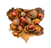 Horse-chestnuts in heart shape isolated on white background. Aesculus hippocastanum. Royalty Free Stock Image