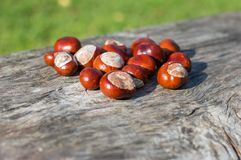Horse chestnuts. Stock Photos