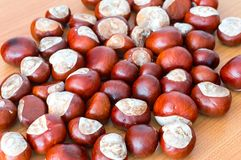 Horse chestnuts. Stock Photography