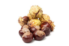 Horse chestnuts isolated on white Royalty Free Stock Photo