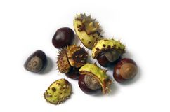 Horse Chestnuts Stock Photos