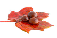 Horse chestnuts on leaf Royalty Free Stock Images