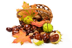 Horse chestnuts with leaves in a basket Royalty Free Stock Photography