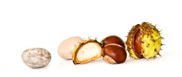 Horse-chestnuts med pebbles Royaltyfri Bild