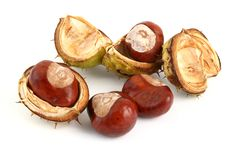 Horse chestnuts in open cases Stock Photo