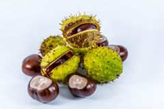 Horse chestnuts in shell Stock Photo