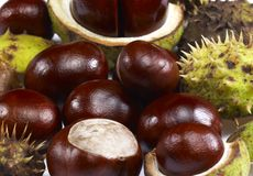 Horse chestnuts. Some horse chestnuts in light back stock photography
