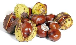 Horse chestnuts. Some horse chestnuts in white back stock image