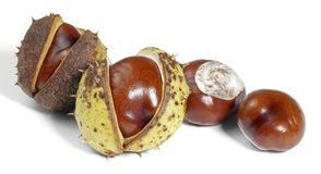 Horse chestnuts. Some horse chestnuts in white back stock photography