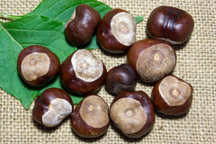 Horse chestnuts Royalty Free Stock Photo