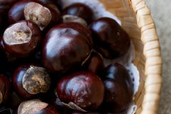 Horse Chestnuts in wooden basket. Organic Food Stock Photos